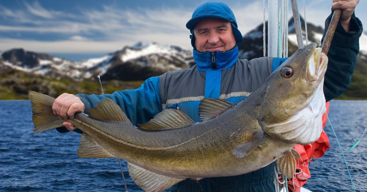 Auf Dorsch angeln - das müssen Sie beachten
