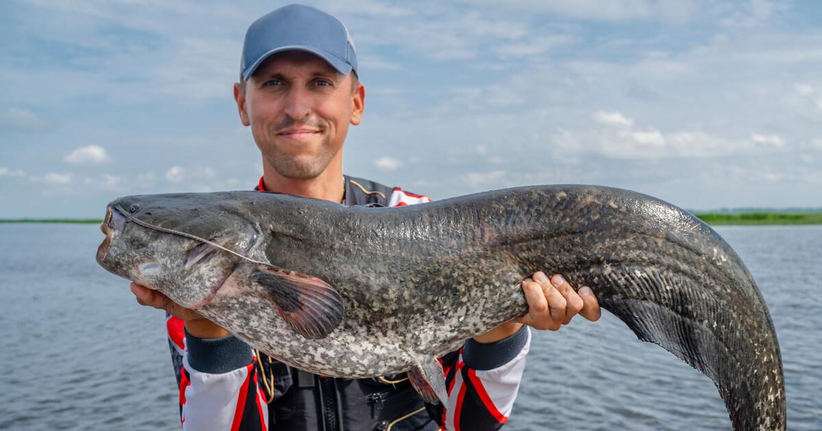 Wels angeln - alles Wissenswerte zum Waller