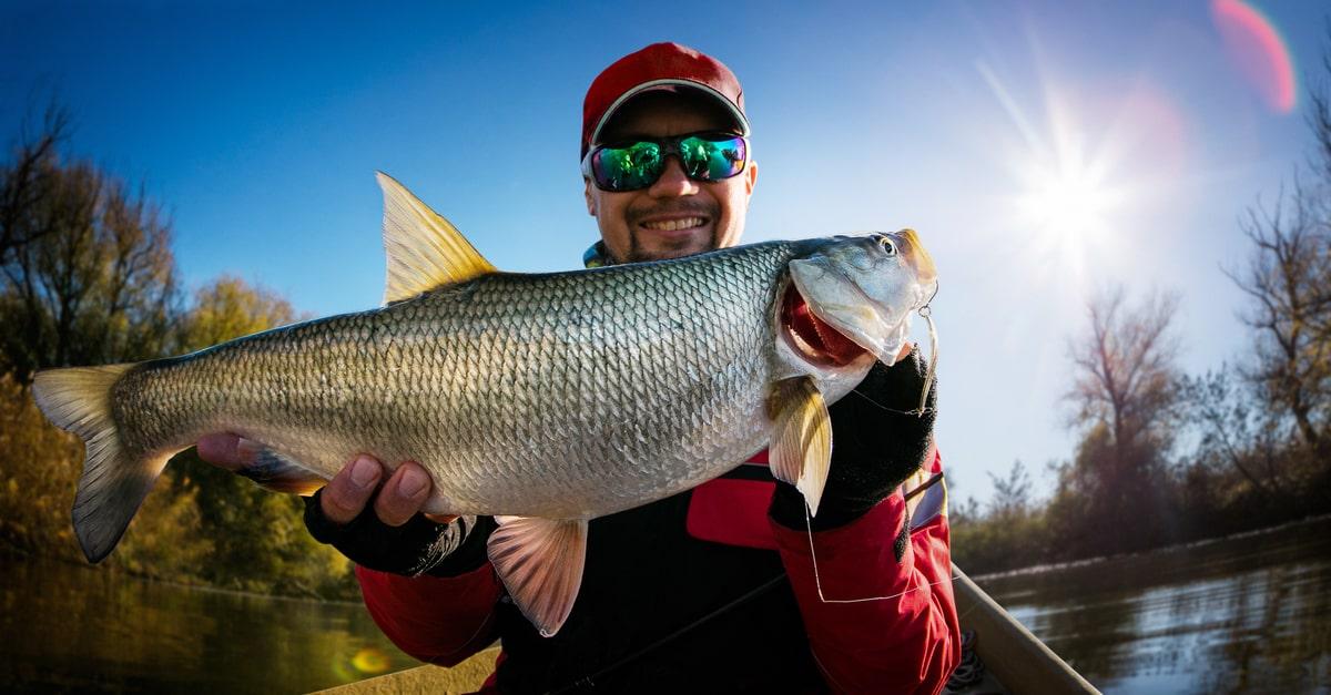 Rapfen - die schnellen Fische für schnelle Angler